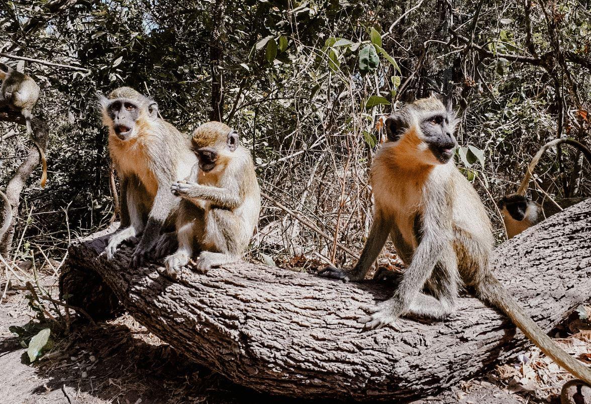 apen-aapjes-monkeypark