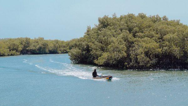 mangroves-gambia-makasutu-kamp-gambia