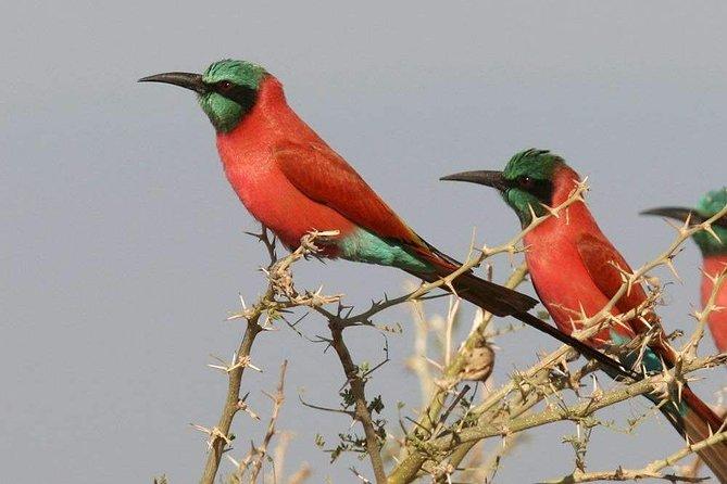 vogel excursie gambia vogelaar
